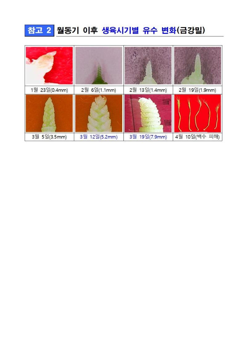 2020-47_붙임1-이상 저온에 따른 밀 생육장애 발생 안내003.jpg